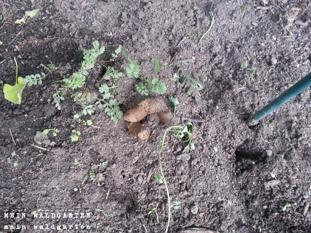Katzenkot Im Garten Hundekot Im Garten Gartenschild Hundekot Nicht