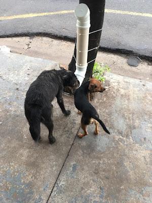 Idea para alimentar a los perros y gatos callejeros