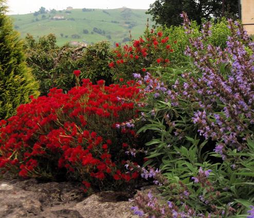 Color en el jard n todo el a o plantas que florecen en mayo - Plantas exterior todo el ano ...
