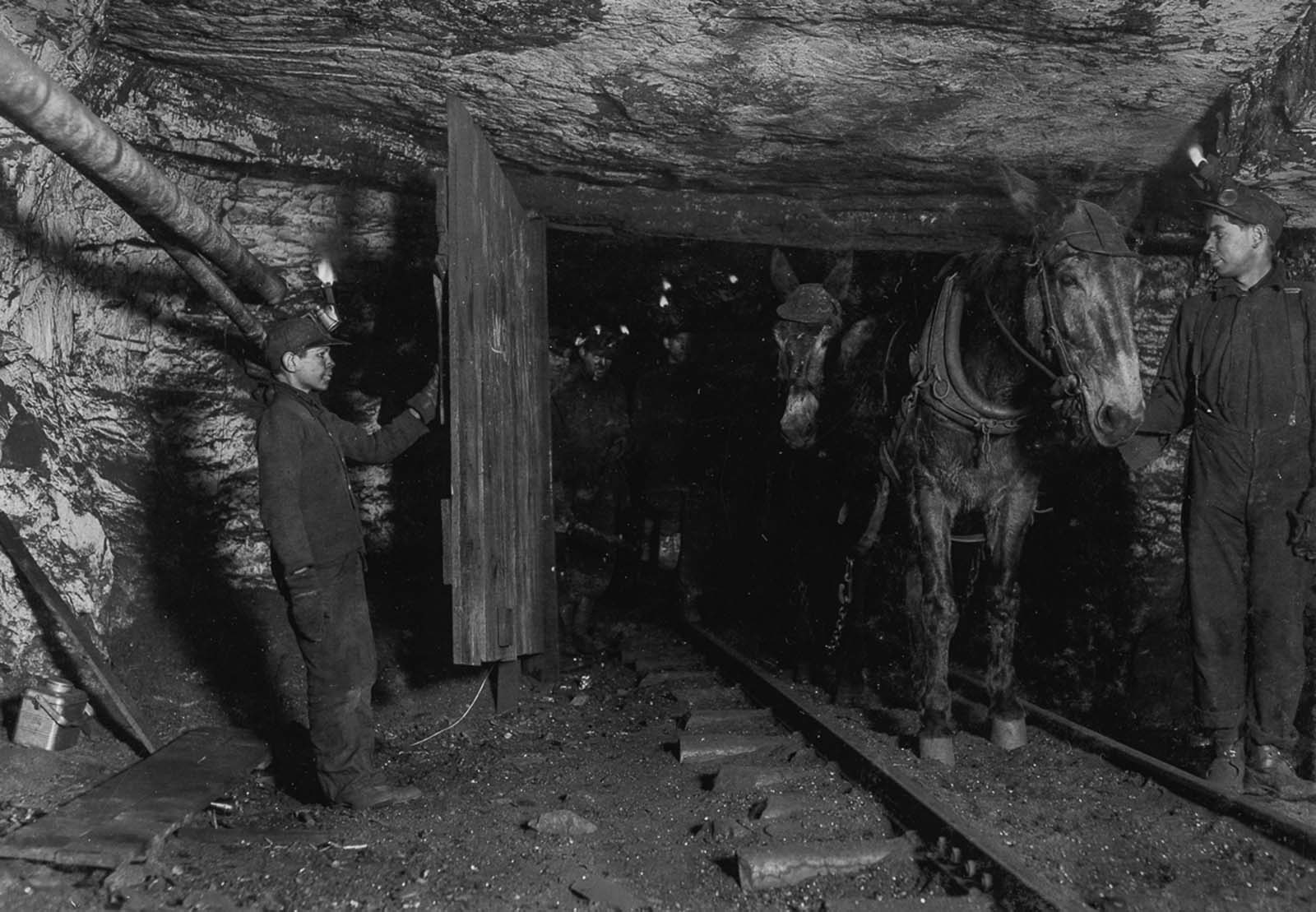 Willie Bryden, age 14, holds the door for a mule cart in a Pennsylvania mine. 1911.