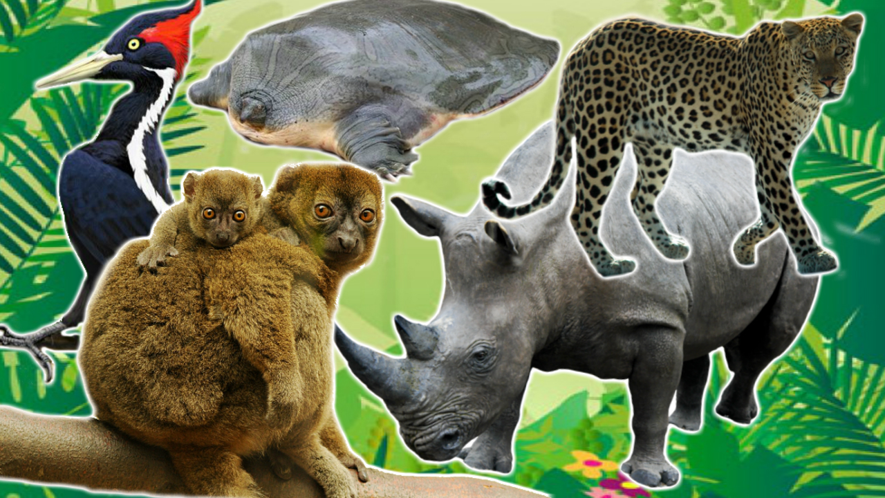 the endangered animal Endangered animals can be de-listed in some cases this can occur if the population of the animal has greatly increased, the habitat has become more stable and all threats are eliminated or controlled.