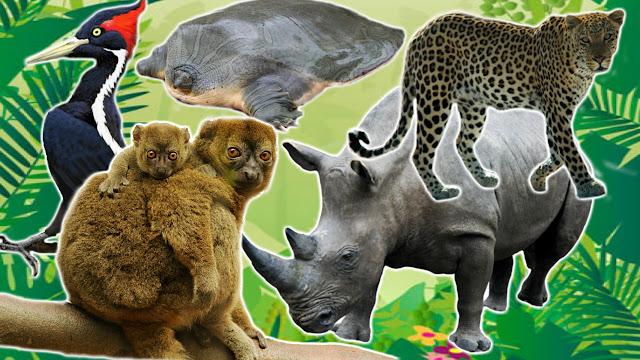 Top 10 Most Endangered Mammals Worldwide