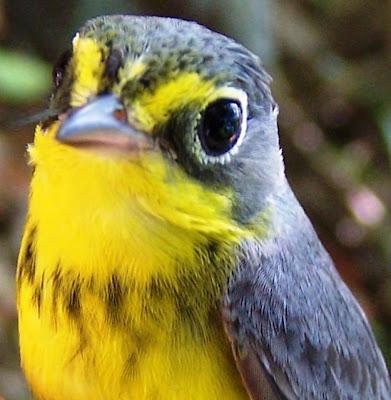 birds Nicaragua laguna de apoyo