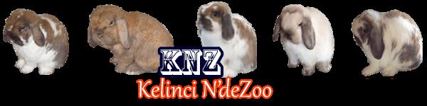 Pusat peternakan Jual Kelinci Holland Lop import murah berkualitas di jawa barat jakarta bekasi bandung indonesia