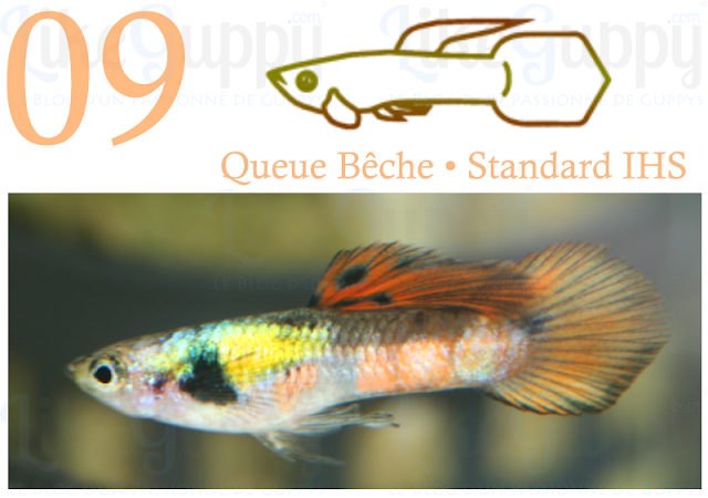 guppy-queue-bêche-standard-ihs