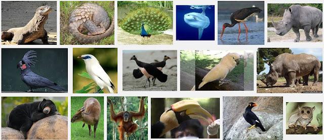 Penyebab dan Contoh Hewan dan Tumbuhan Langka di Indonesia serta cara Melestarikannya