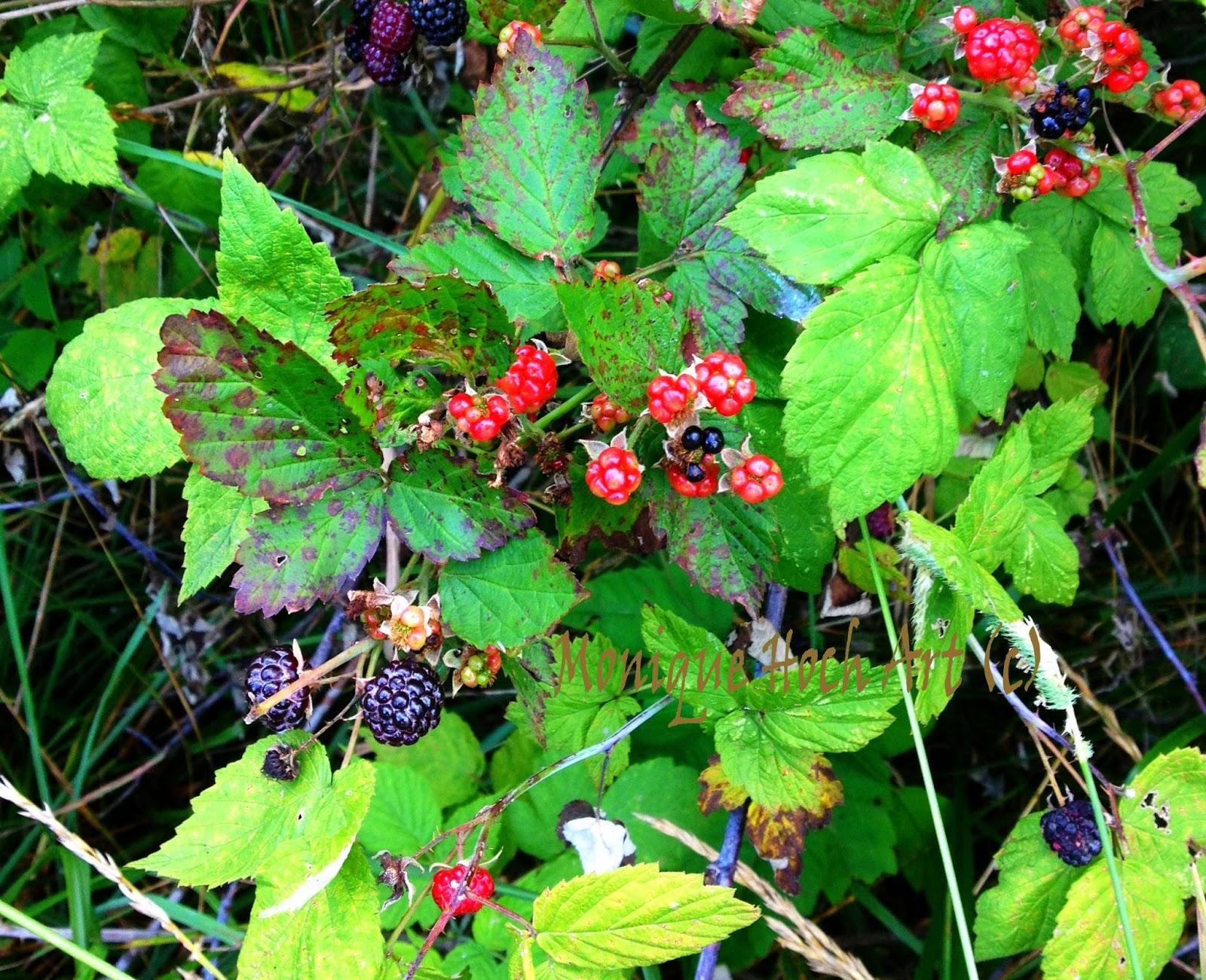 Monique Hoch S Art Blog Wild Raspberries