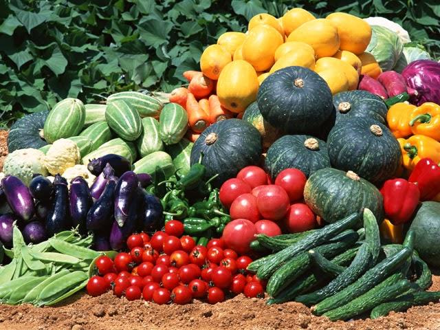 diferentes verduras de temporada