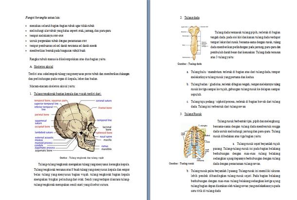 Contoh Makalah Anatomi Fisiologi Manusia