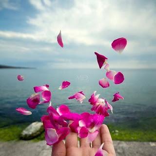 pétalas das flores