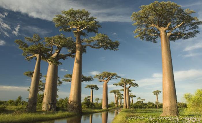 Pohon Makan Manusia