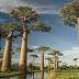 Pohon Makan Manusia, Dahulu Pohon Pemakan Manusia Banyak Diceritakan