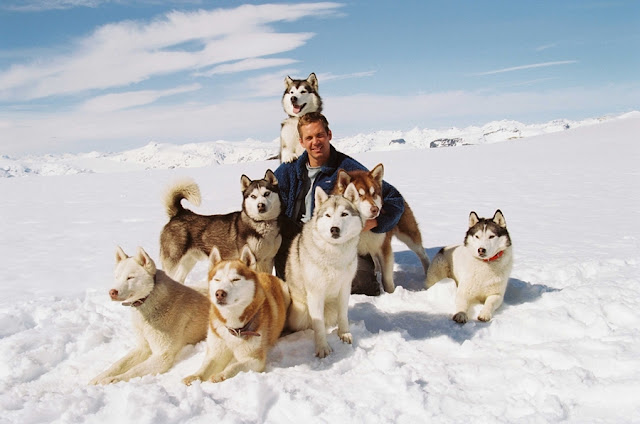 eight below paul walker and dogs