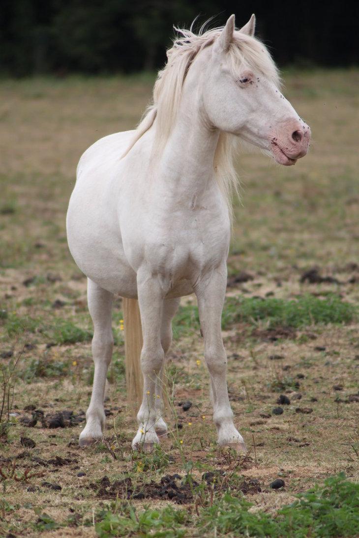 Pony | A-Z List of 125 Rare Albino Animals [Pics]