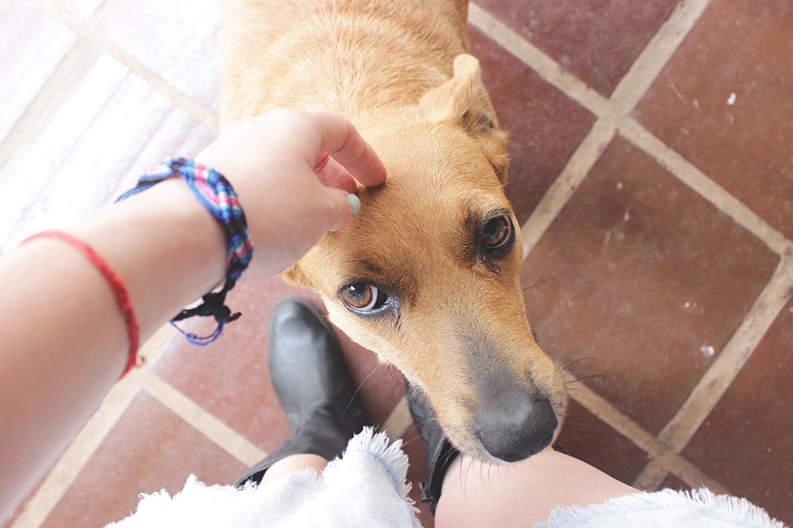Conheça a Lika (minha cachorrinha)