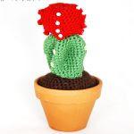 https://translate.googleusercontent.com/translate_c?depth=1&hl=es&rurl=translate.googleusercontent.com&sl=auto&tl=es&u=http://www.farecreare.it/cactus-alluncinetto-free-pattern-per-amigurumi/&usg=ALkJrhipjDT6hU4SBym2AT8j0FGOpP55Zw