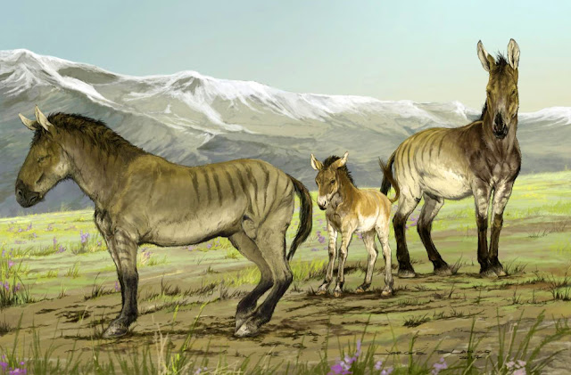 More light shines on Pleistocene extinction event with possible discovery of new genus of horse