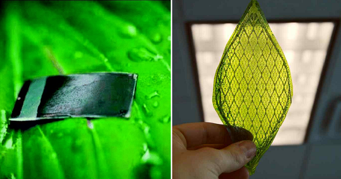 Artificial Leaf Can Convert Carbon Dioxide Into Liquid Fuel By Using Sunlight
