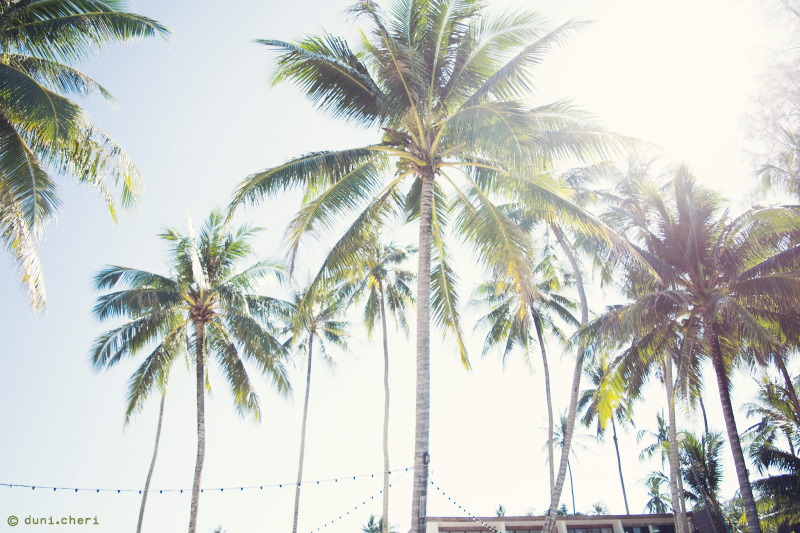 Thailand Palmen Sonne Strand