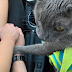 This Cat Holds His Owner's Hand Before Final Visit To The Vet