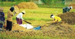 Pengembangan Pertanian Untuk Keberhasilan Usahatani