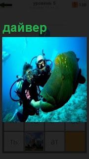 На большой глубине дайвер играет с самой опасной рыбой муреной, трогая её за плавники