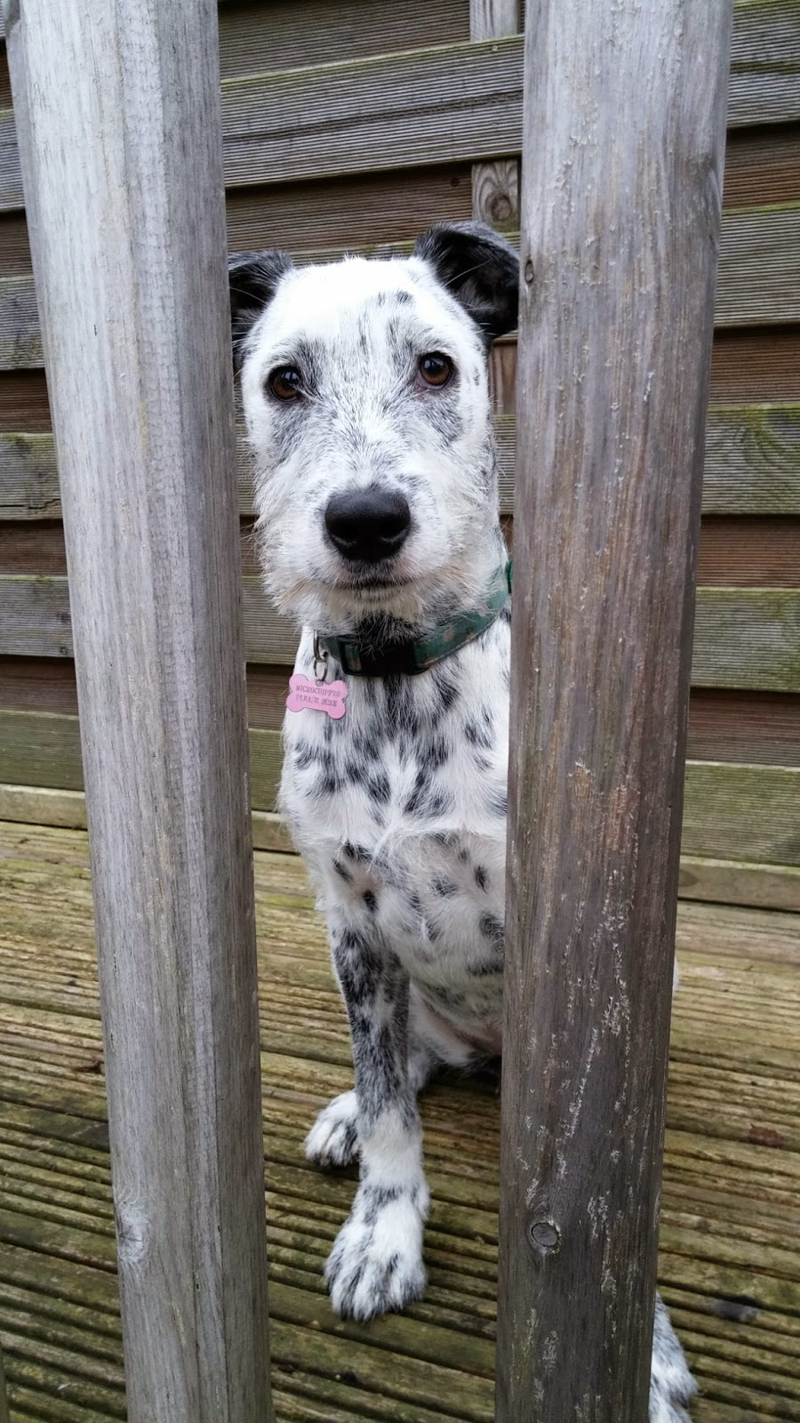 spotty dog on watch
