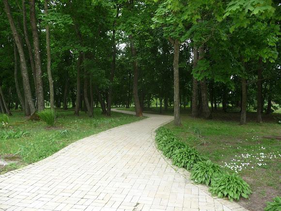 Батурин. Парк Кочубея. Віковічні дуби