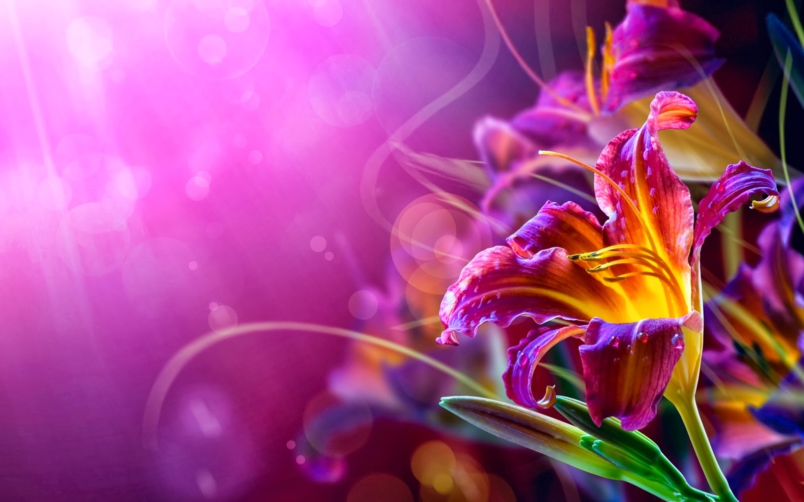 30 Wallpaper Bunga Cantik Deloiz Wallpaper