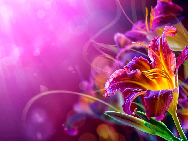 Beautiful Flower Wallpaper Your Title