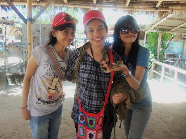 wisata pulau penyu