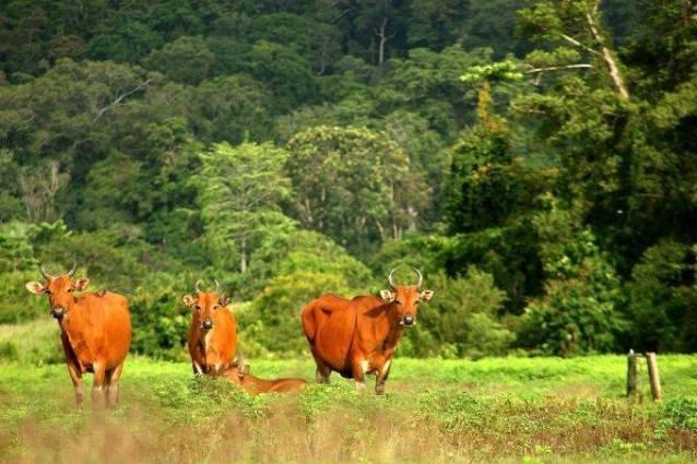 Taman Nasional Meru Betiri, Jember-Banyuwangi.