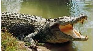9700 Gambar Hewan Kelas Reptilia Gratis Terbaru