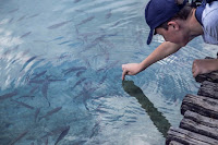 bisnis ikan nila, ternak ikan nila, ikan nila, usaha ikan nila, usaha ternak ikan nila, ternak ikan