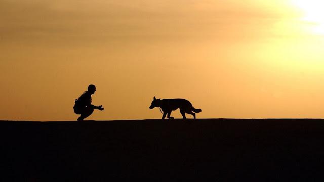 siluet anjing dan pemiliknya di pantai saat senja