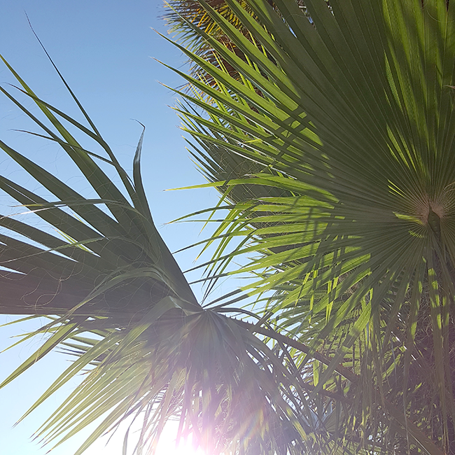 vacation, Urlaub, Spain, Spanien, palmtrees, Palmen
