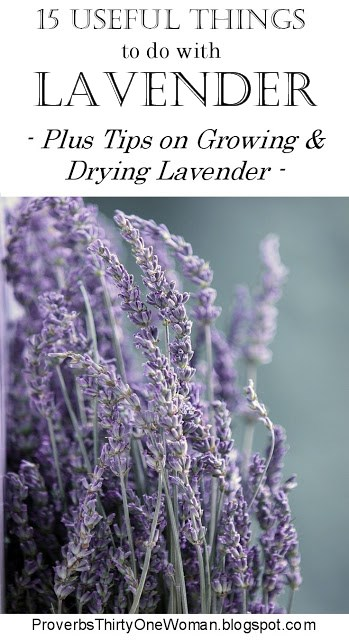 Growing and Drying Lavender