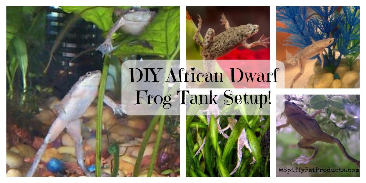 best diy african dwarf frog tank setup for 2018 spiffy pet products