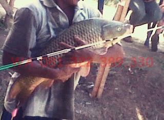 Essen Katilayu Ikan Mas Babon