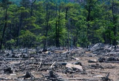 Hutan Dan Lingkungan Hidup