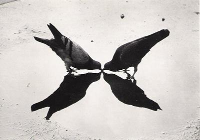 http://zzzze.tumblr.com/post/157532392160/ernst-haas-trafalgar-square-pigeons-london-1949