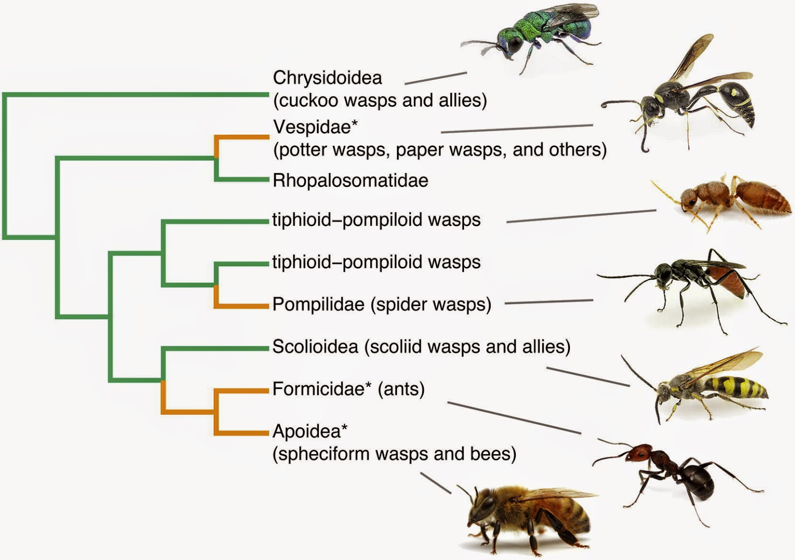 Image result for abejas familia