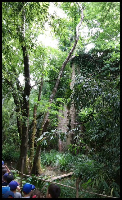 bambouseraie montauroux