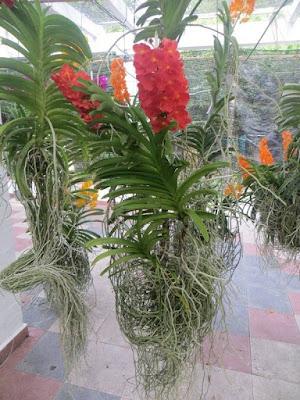 растения растет без почвы