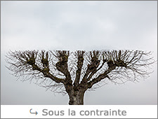 http://www.laurentbessol-photographies.fr/p/arbres.html