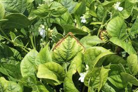 function, role, deficiency of nitrogen in plants