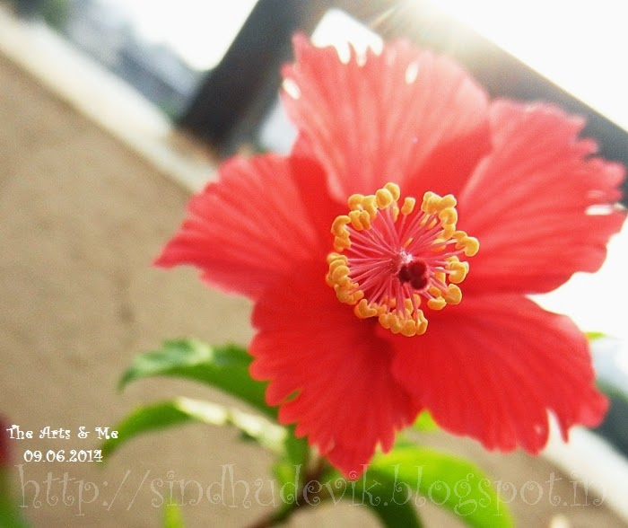 Red hibiscus flower with sticky stigma