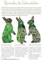 pyramide de l'alimentation naturelle du lapin nain