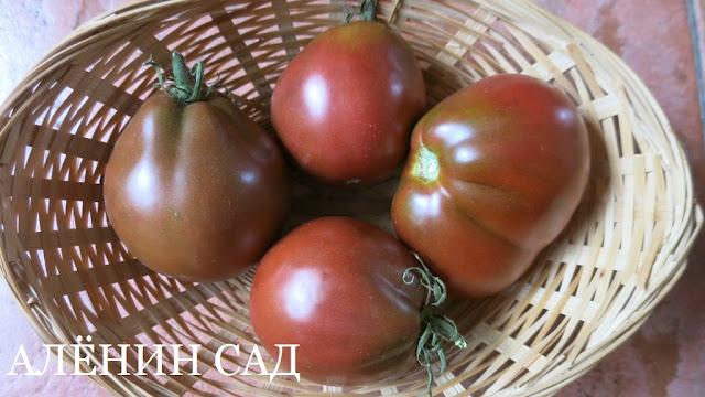 Груша черная, томаты, помидоры, сорта томатов, черные томаты, аленин сад