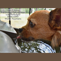 Petsafe water fountain giveaway